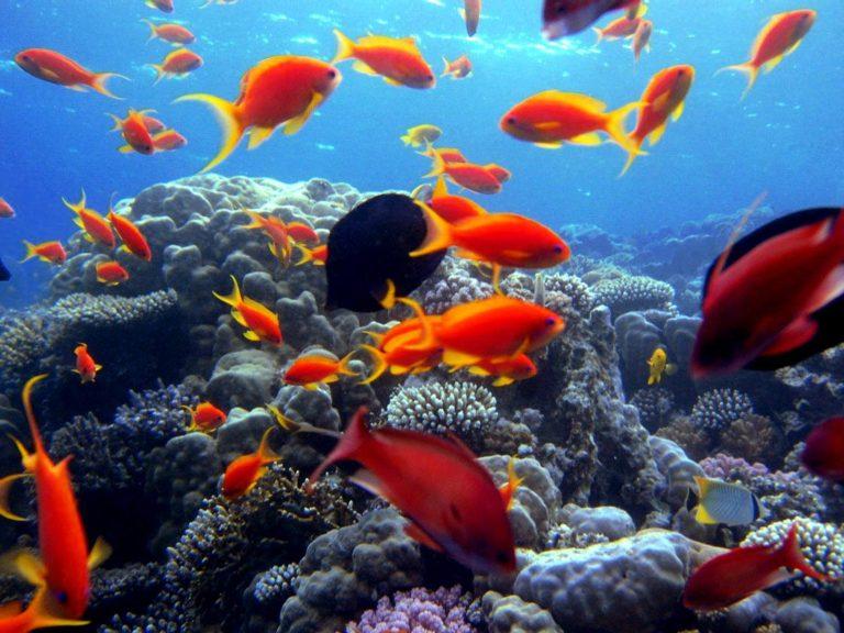 Mar Rosso in ripresa, italiani crescono del 13%