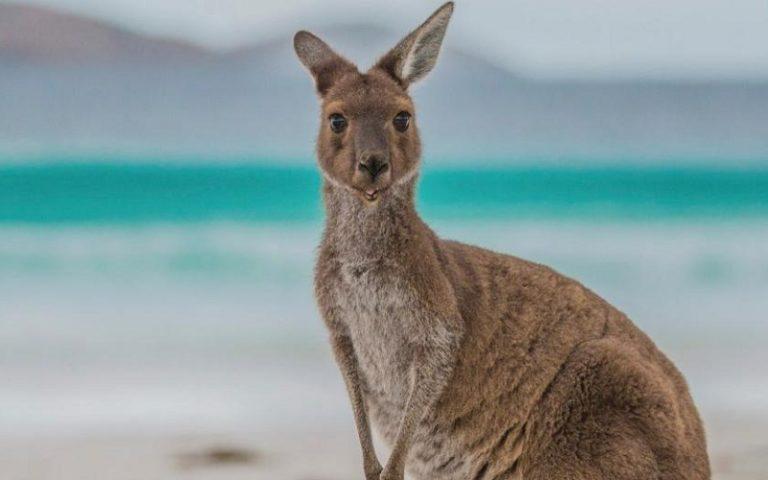 Australian Tourism Exhibition: appuntamento sul web