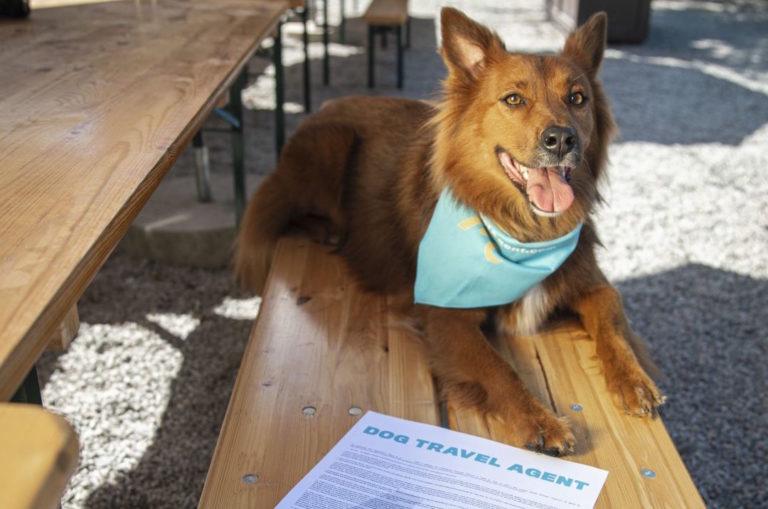 """""""Ciao Sono Mo, e sono il primo cane agente di viaggi"""""""